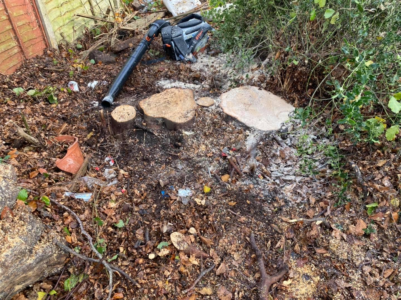 Beech trees Stump Grinding Oct.22-2020