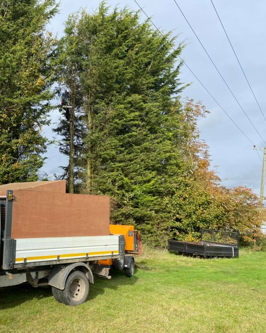 conifer removal 2 Oct. 24-2020