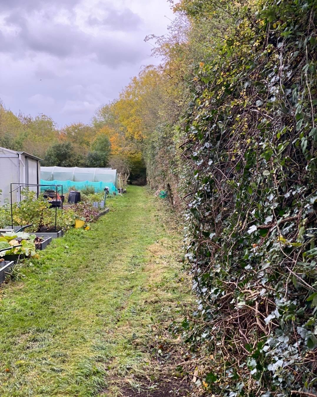 overgorwn hedge after oct20-2002020