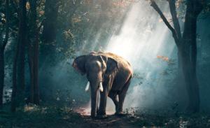 ecology-conservation