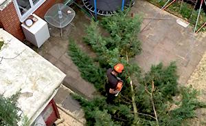 emergency-tree-work