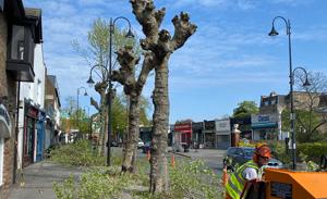 roadside-tree-clearance