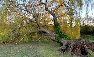 storm-tree